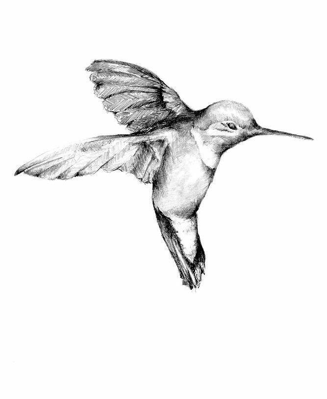 667x814 Fresh Bird Flying Drawing