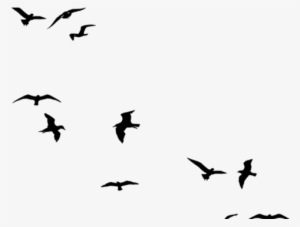 300x227 Huge Collection Of 'birds Flying Drawing Tumblr' Download More