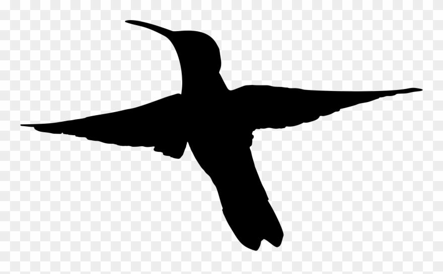 880x545 Hummingbird Silhouette Drawing Art