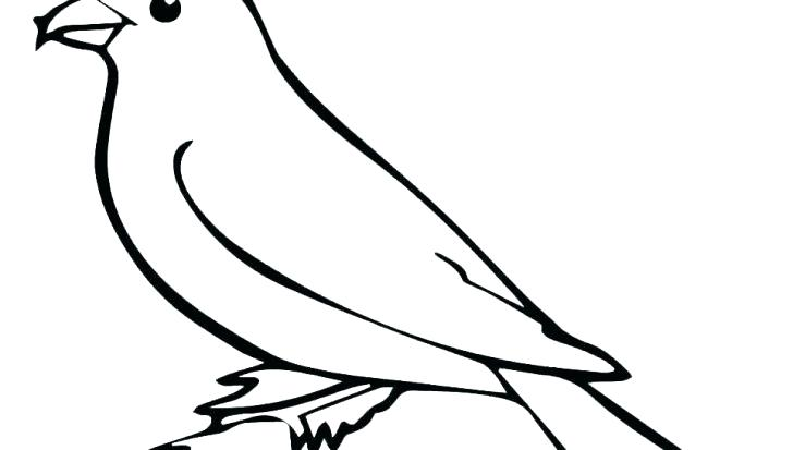 728x413 How To Draw A Falcon Flying