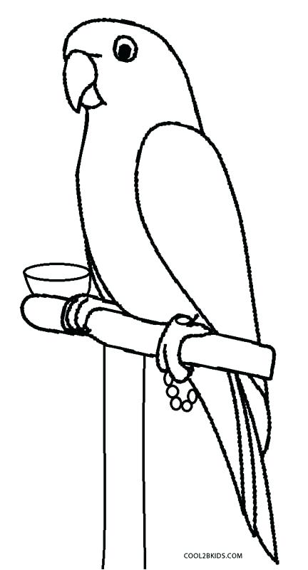Flying Parrot Drawing | Free download on ClipArtMag
