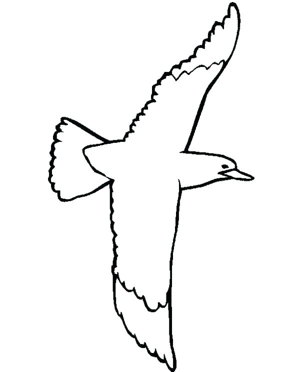 600x745 Flying Seagull Coloring