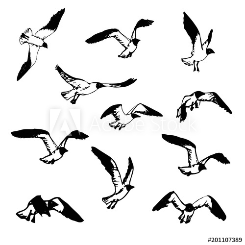 500x500 Hand Drawn Flying Seagulls Black And White Illustration Sketch