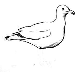 323x300 How To Draw A Seagull