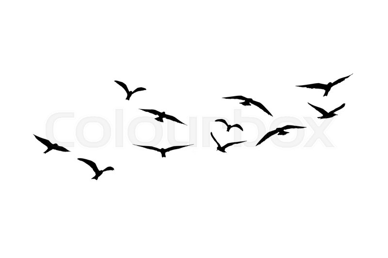 800x533 A Flock Of Flying Seagull Birds, Stock Image Colourbox