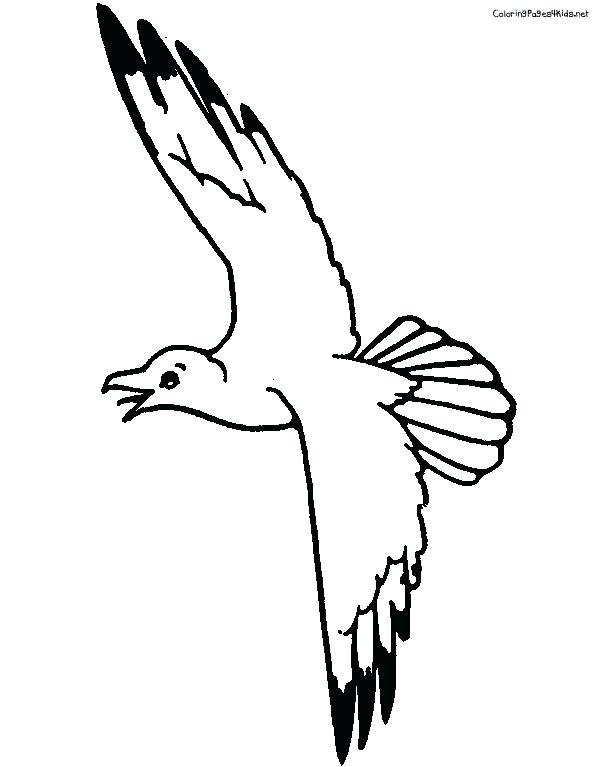 612x767 Seagull Coloring