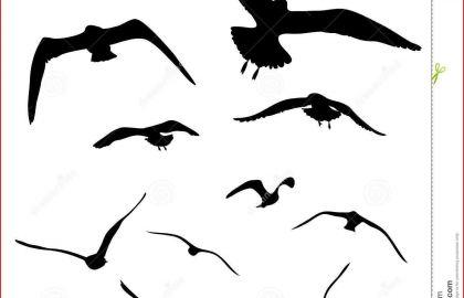420x270 Seagull Drawing Flying Birds Estampados