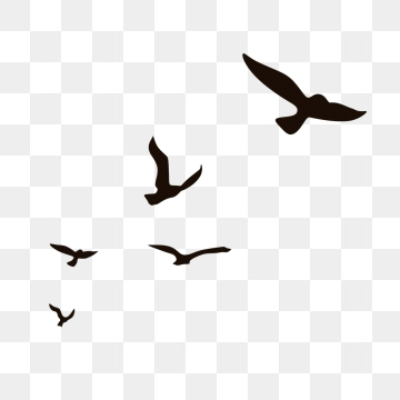 360x360 Seagulls Png Images Vectors And Free Download