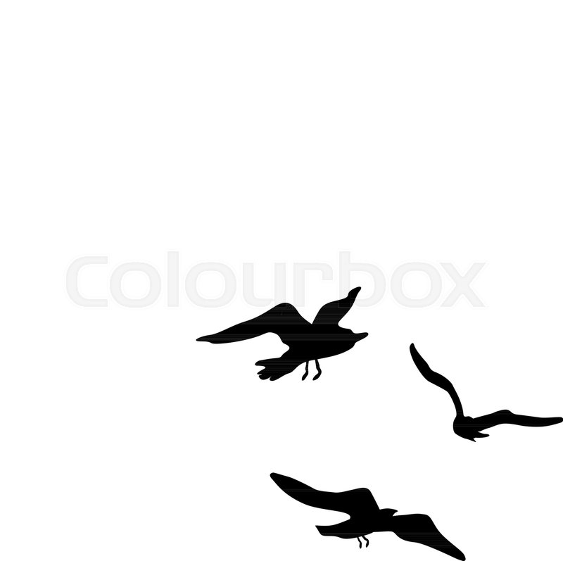 800x797 Vector Silhouettes Of Flying Seagulls, Stock Vector Colourbox