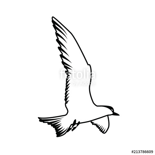 500x500 Gull A Seagull With A Black Head Silhouette Of A Seagull Birds