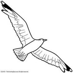 236x236 Best Of Flying Seagull Coloring