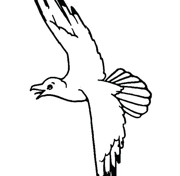 612x600 Seagull Coloring