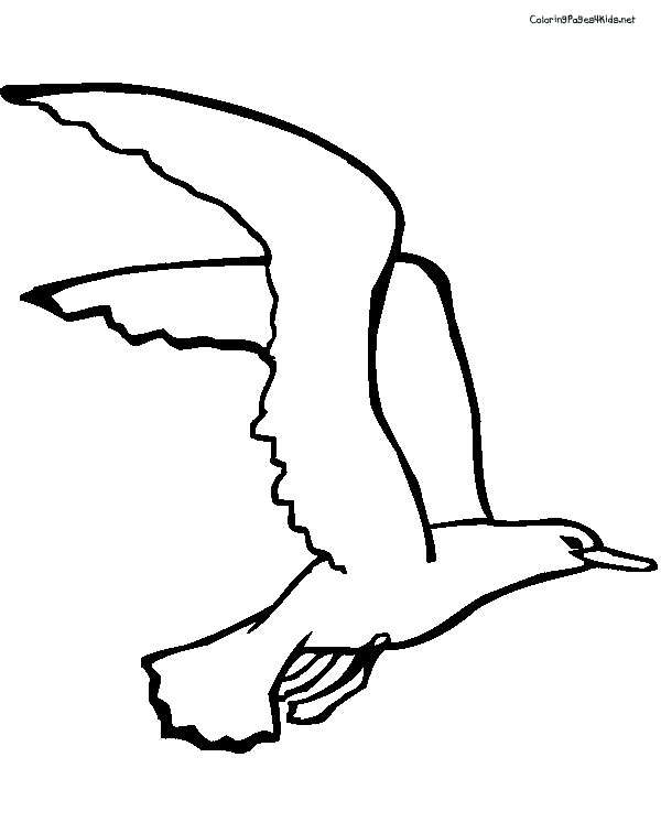 600x756 Cozy Design Pictures Of Seagulls To Colour Seagull Drawing