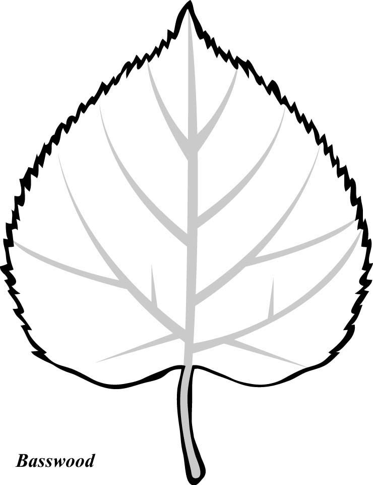 740x961 Leaves To Color