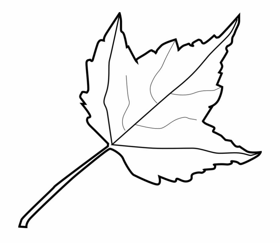 920x800 Maple Fall Leaf Plants Nature Autumn Foliage