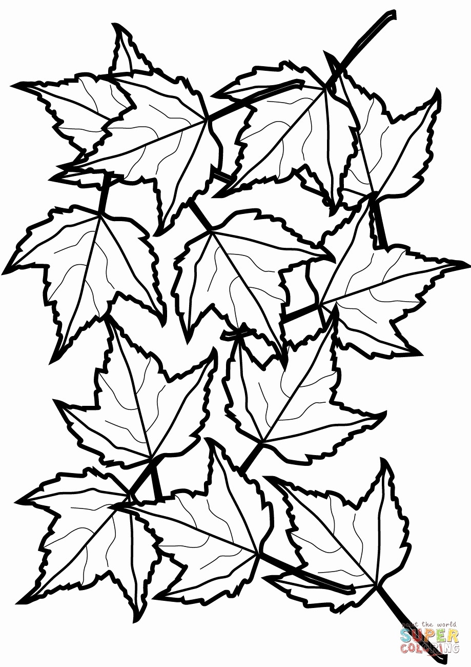 919x1300 Secrets Fall Foliage Coloring Pages Leaves Printable Best