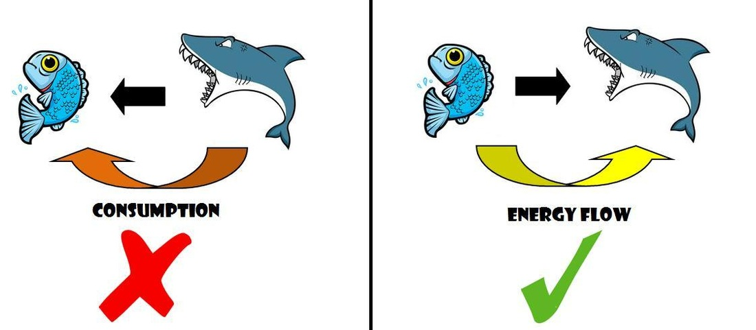 1100x481 Day Food Chains