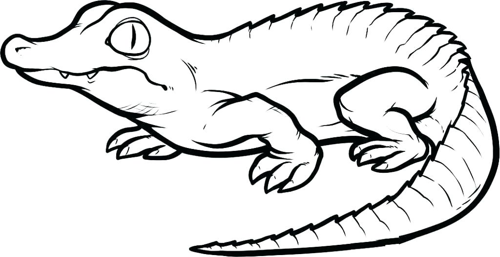 1024x528 florida gator coloring pages gator coloring pages gator coloring