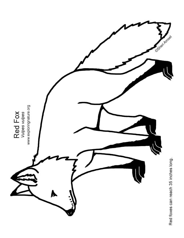 612x792 Forest Drawing Fox For Free Download