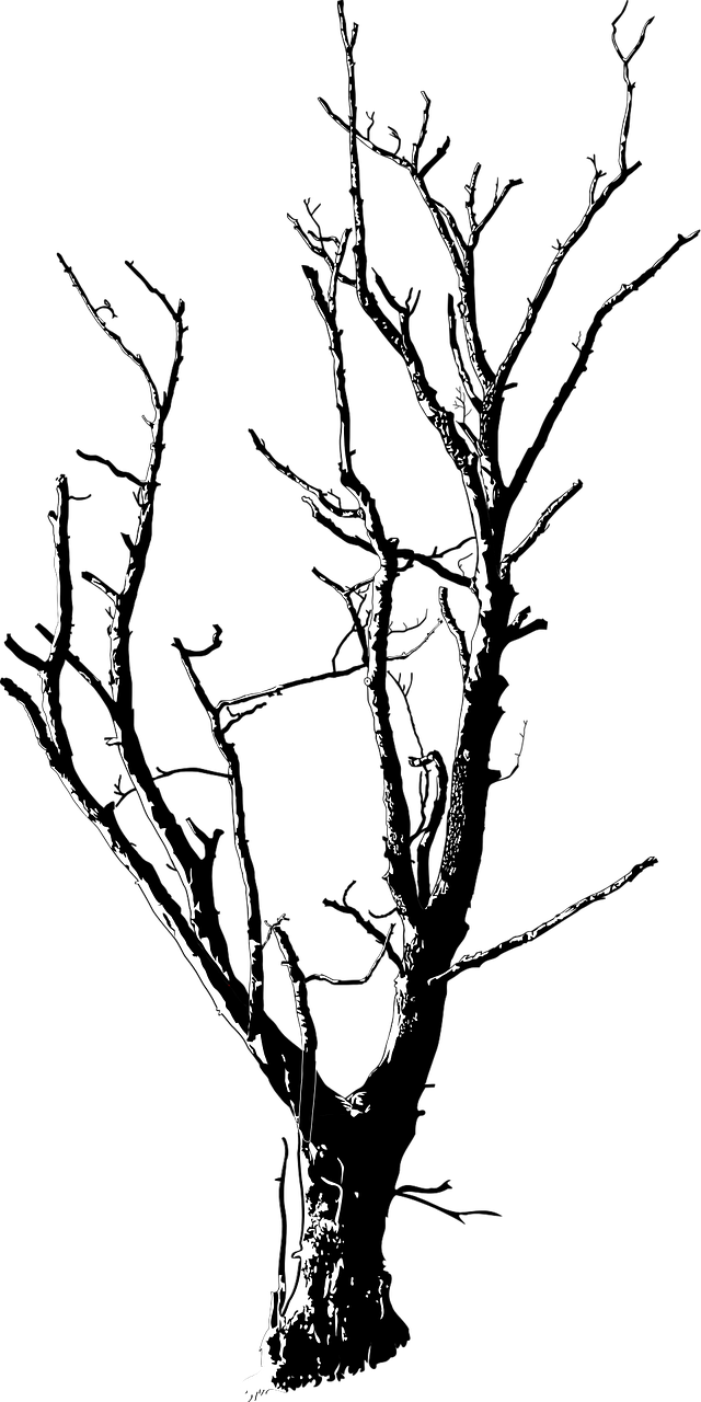 640x1280 Black And White, Branches, Deadwood, Forest, Landscape