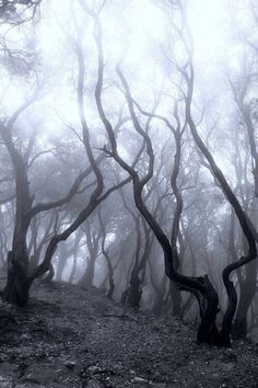 236x354 Huge Collection Of 'dead Forest Drawing' Download More Than