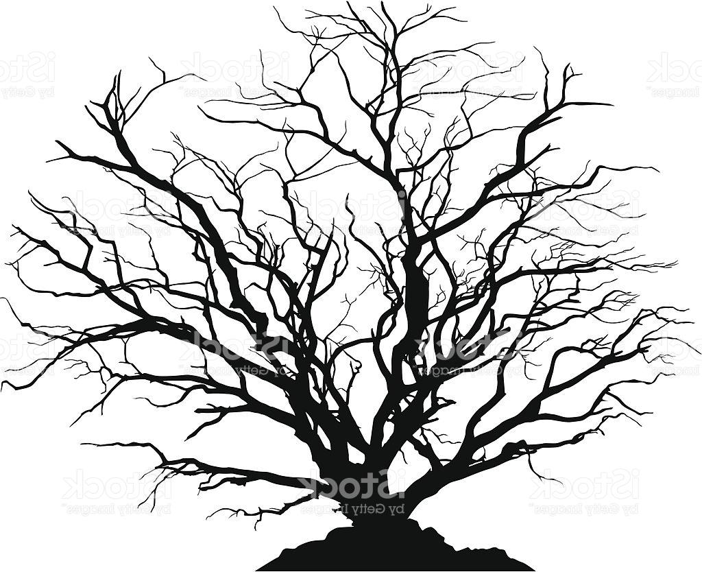 1024x834 Huge Collection Of 'dead Forest Silhouette' Download More Than