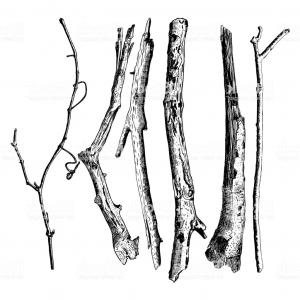 300x300 Set Of Detailed And Precise Ink Drawing Of Wood Twigs Forest