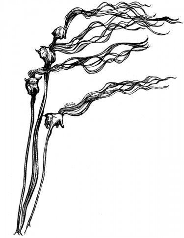 375x485 Weee Little Bulls In The Kelp Science!! Tattoo Drawings, Sea