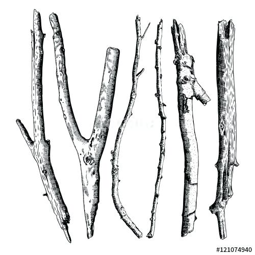 500x500 Branches Drawing