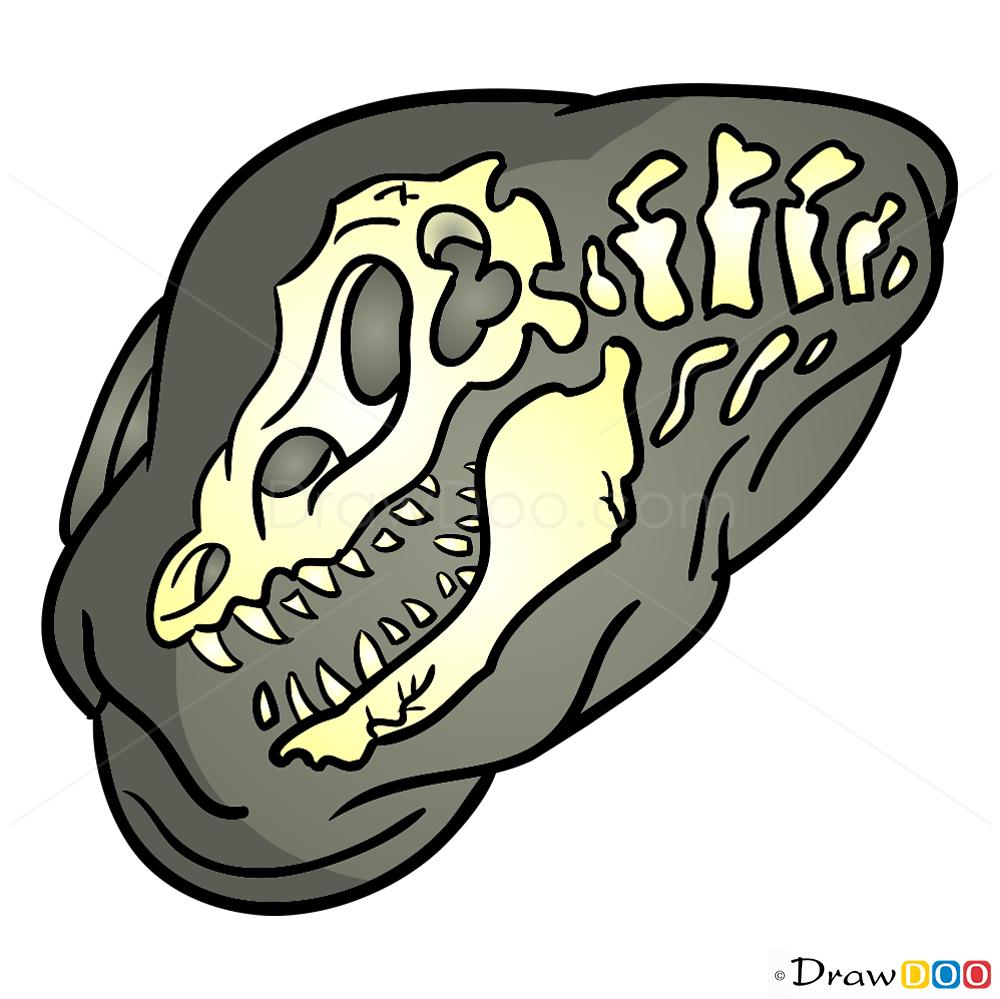 1000x999 Dinosaur Fossil Drawing How To Draw Fossil, Dinosaurus