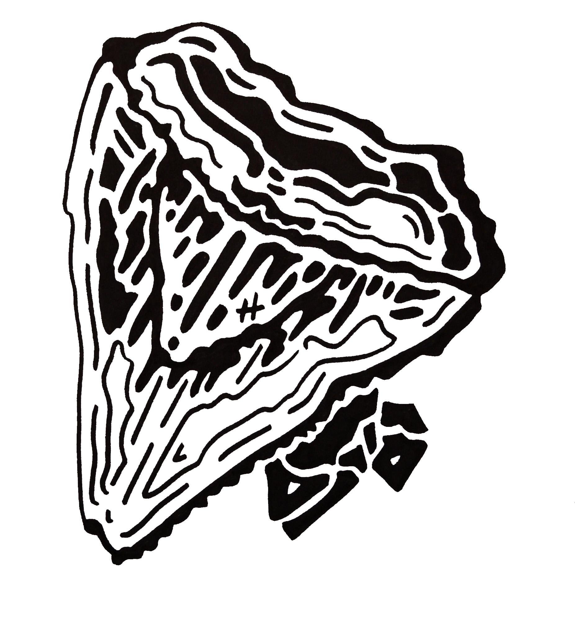 1853x2000 February Fossils Tricia Design