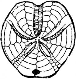 250x258 Fossil Clipart Clip Art, Picture