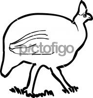 191x200 Freehand Drawing Image From Pictofigo For Guinea Fowl