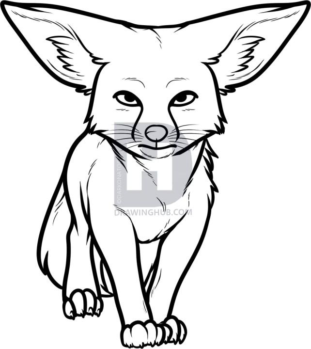 642x720 how to draw a kit fox, kit fox, step