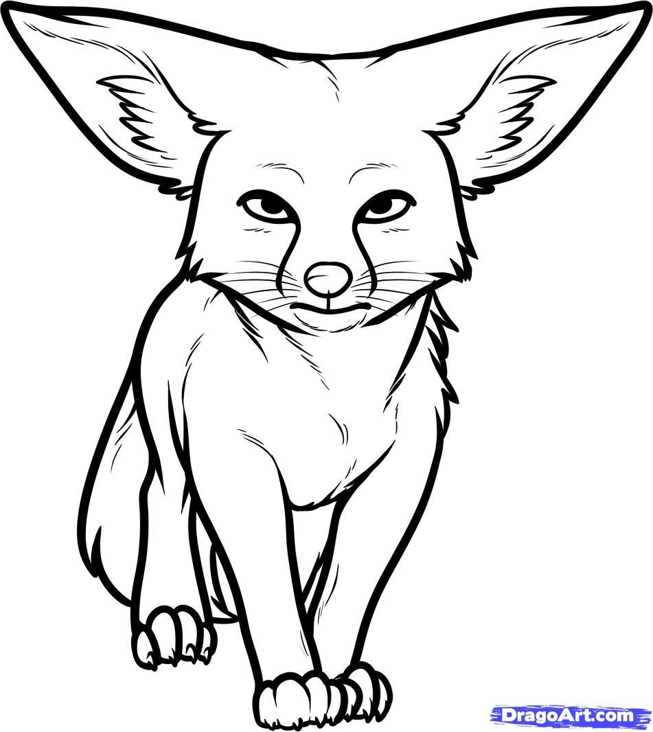 951x1066 how to draw a kit fox, kit fox, step