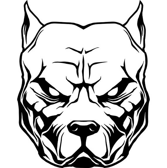 570x574 Pitbull Clipart Line Drawing