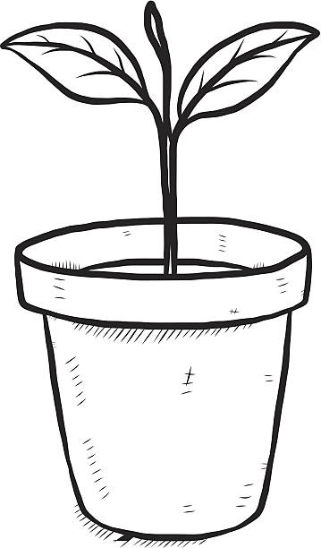 359x612 Plant Black And White Clipart Pot Flower Line Drawing