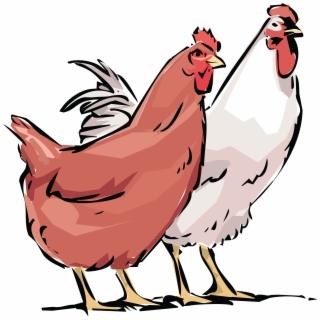320x320 Hd Clipart Of Hen