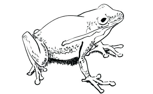 650x400 Frog Drawings Easy Frog Drawings Easy Frog Drawing Tutorial