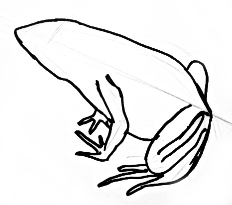 466x412 How To Draw A Frog