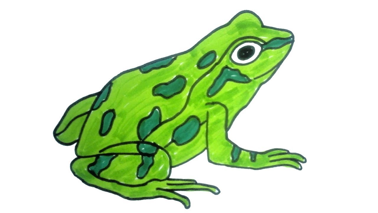 1280x720 How To Draw A Frog Easy Step