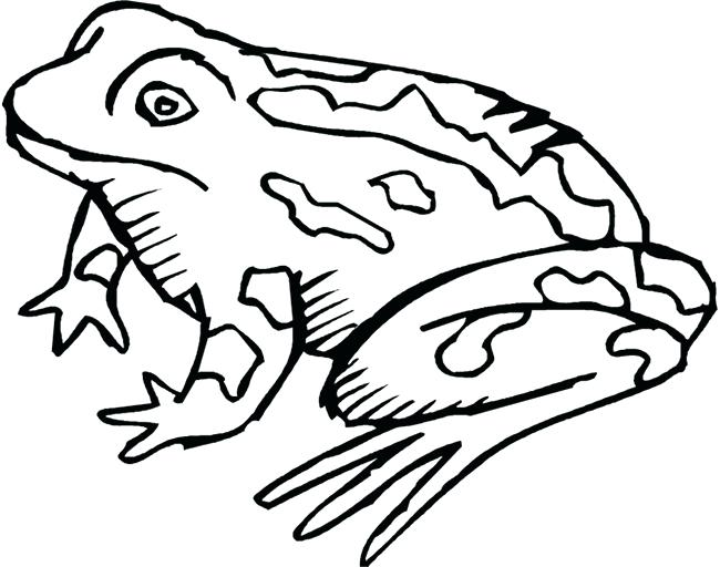 650x512 frog outlines tree frog line drawing frog outline template