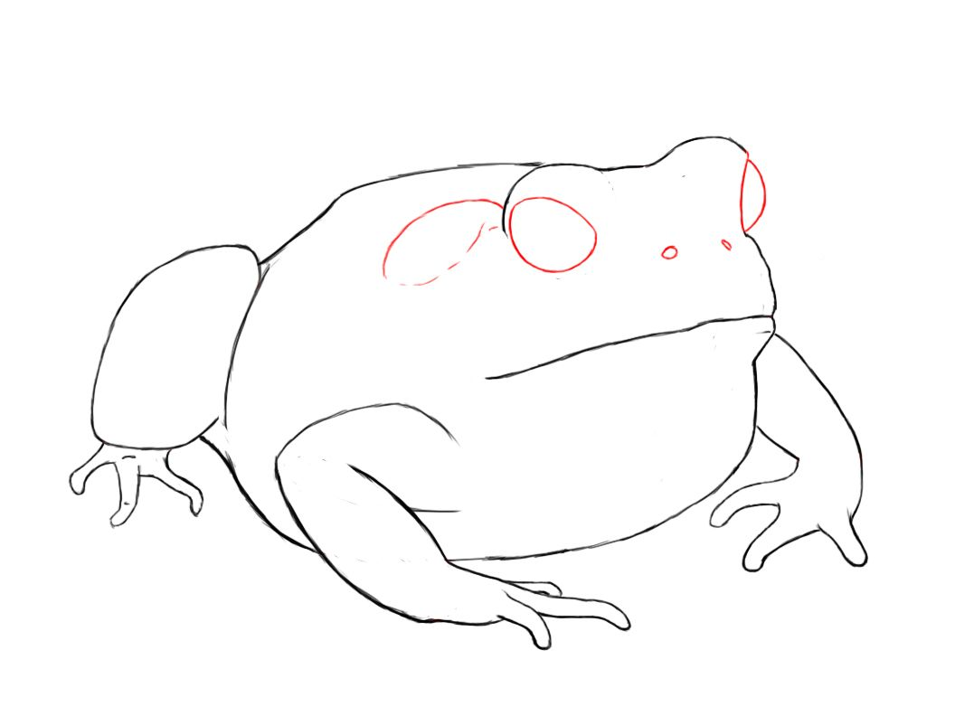 1056x792 how to draw a toad fox paper drawing, drawings, toad