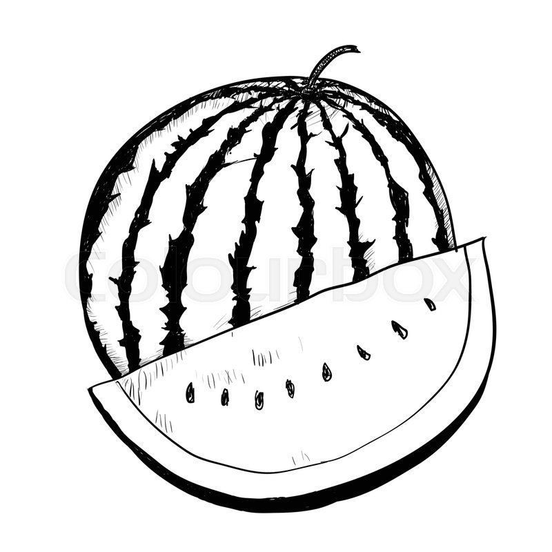 800x800 Hand Drawing Of Watermelon On White Stock Vector Colourbox