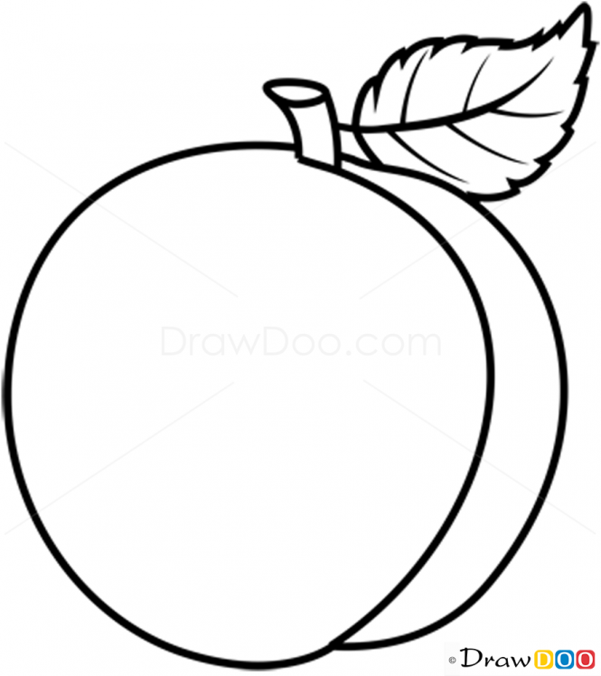 665x747 Fruit Drawing Line For Free Download