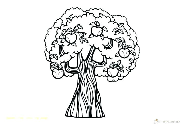 728x495 Coloring Pictures Of Fruit Trees Cherry Tree Drawing Pencil