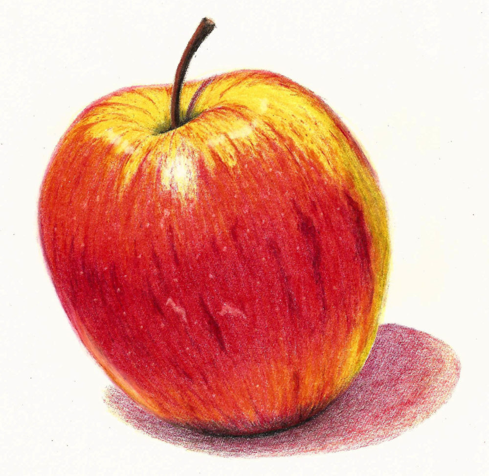 1000x972 Coloured Pencil Drawing Lessons From Unit Of The Complete