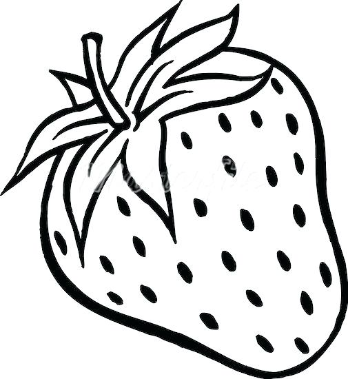 505x550 drawing of a strawberry strawberry drawing strawberry fruit