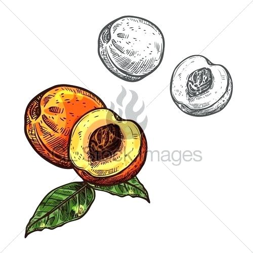 500x500 Sketch Of A Fruit Fruit Drawings To Color Drawing And Colouring