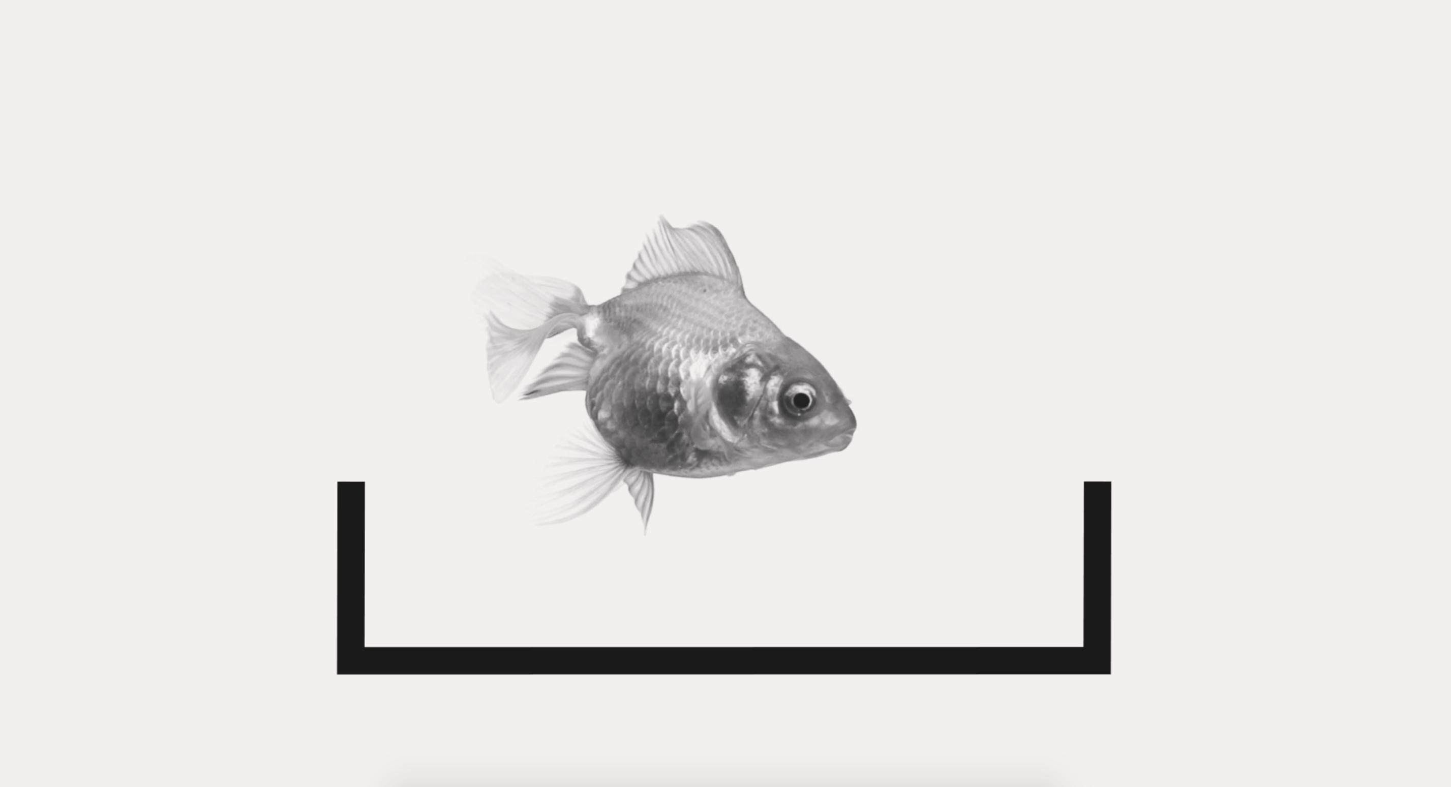 2854x1548 Fuel Video Still Goldfish Fuel Transport